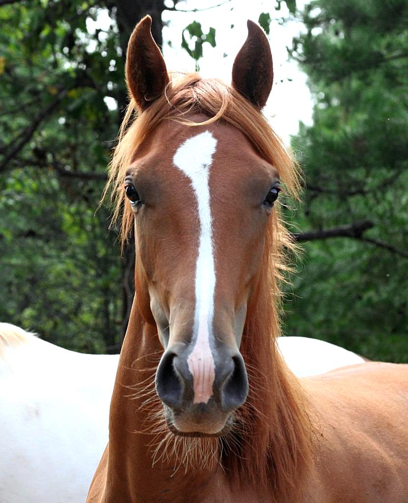 haas-pellets-cavalo